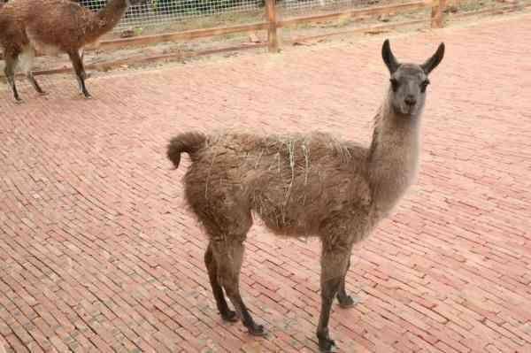 濮阳东北庄野生动物园开园了!