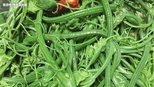 农村地头的一些野菜,对清洁肠道、美容养颜等有明显的保健作用
