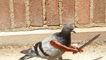 外网给鸟P手大赛,真是闲的