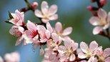 喜鹊树上喳喳叫,明年接横财,撞桃花,有大奖,喜事不断的生肖!