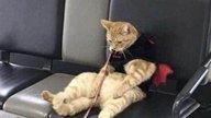 猫咪和主人走散,直接坐椅子上等待,路人看到后忍不住笑了