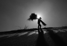 沙漠里种树16年 他说:不让孩子再受伤害