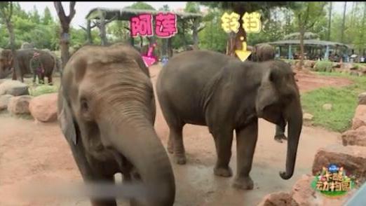 亚洲象姐妹花:阿莲与铃铛