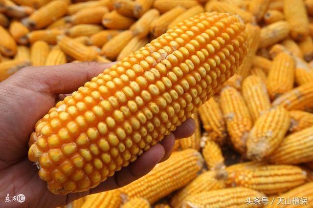 农业人看看,近期小麦、玉米、水稻和大豆市场价格行情