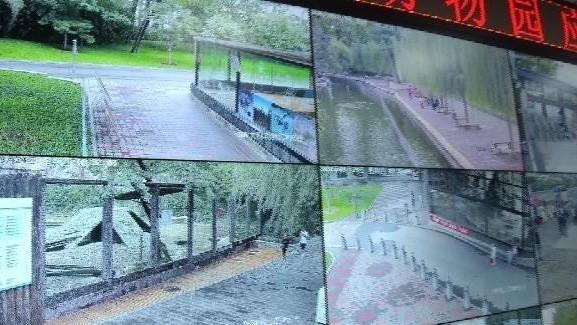 """女游客带孩子喂狼吃草 北京动物园将其列入""""黑名单"""""""