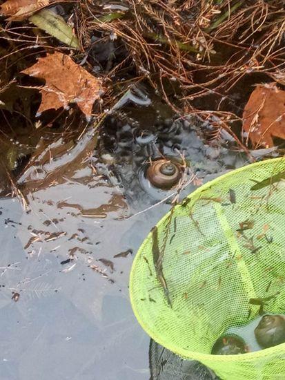 阳春三月 西湖边这种生物出来添乱了  见到你也可以清剿