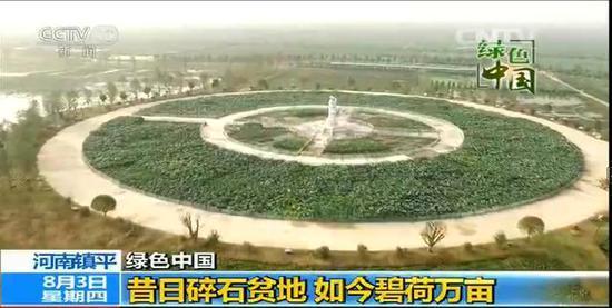 中央电视台新闻频道对镇平县万亩荷花直播