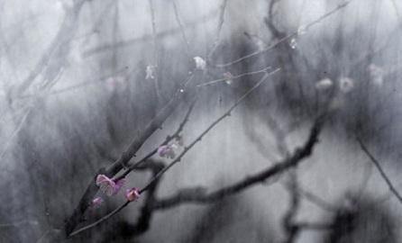 【转载】十首唯美婉约宋词,最合少女情怀,但大部分人只读过第一首 - 夕阳旷野 - 夕阳旷野的博客