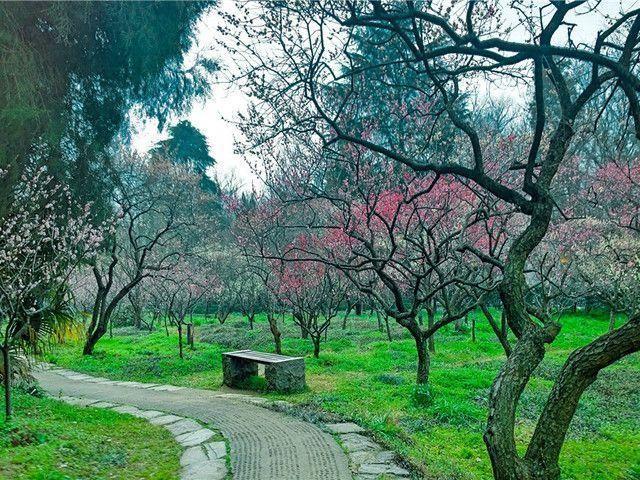 春天到了,南京哪些地方繁花似锦:南京赏花胜地推荐