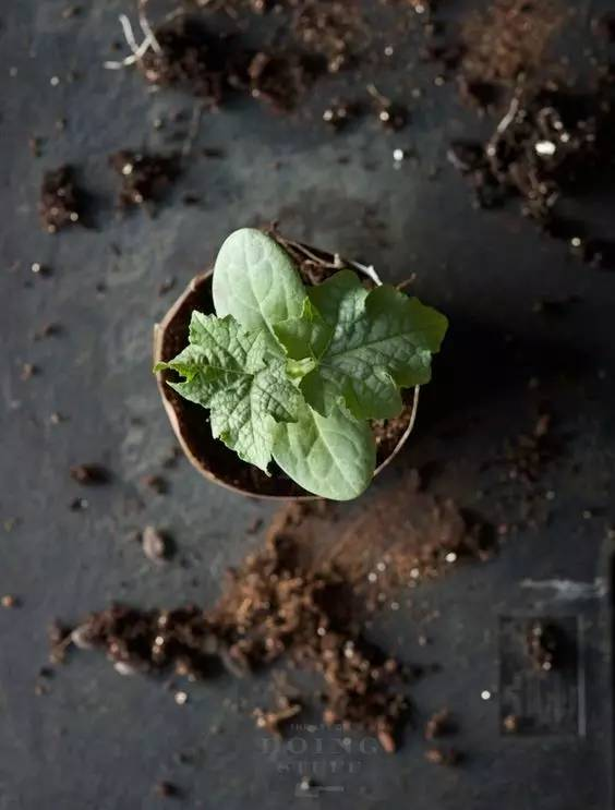 往花盆里加点这个,再也不怕积水烂根,3天黄叶变绿叶丨实用